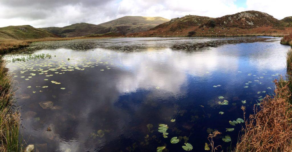 The Bearded Lake