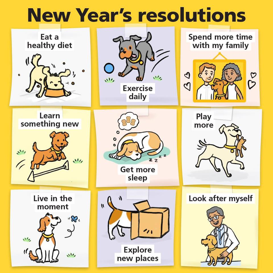 New Year dog resolutions